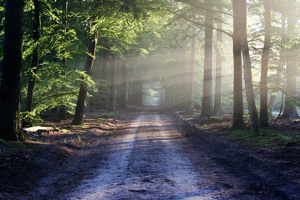 早起きを克服したら人生が変わった話