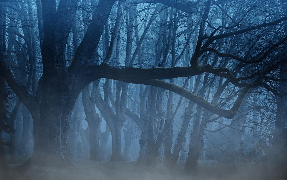 【第2位】夜と霧 |ヴィクトル・エミール・フランクル